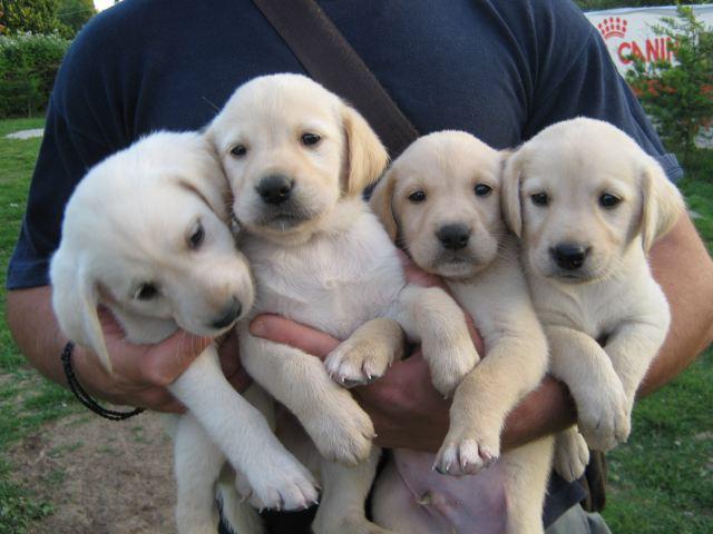5 αγαπημένες ράτσες σκύλων!