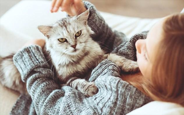 Αλλεργία στις γάτες: πού οφείλεται και πώς αντιμετωπίζεται