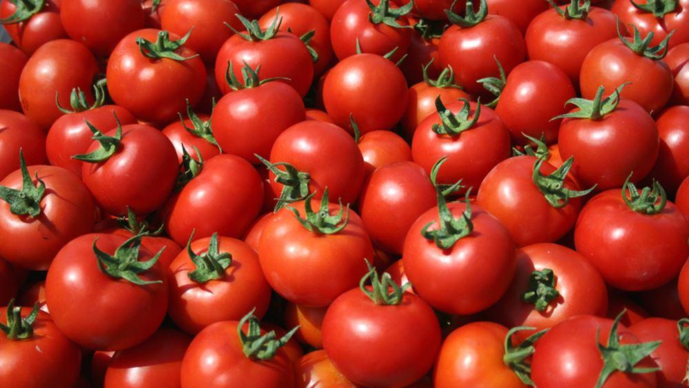 Οι ντομάτες μπορούν να βελτιώσουν την ανδρική γονιμότητα – Νέα έρευνα